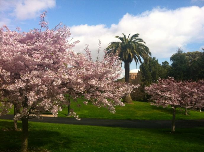 Spring in the Presidio