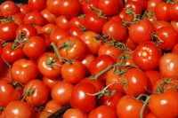 Summer-Tomatoes